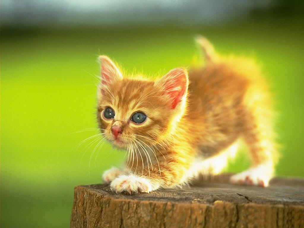 kittens for nintendo 2015 malstrom u0027s articles news