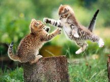 Cute Kitten Screensavers