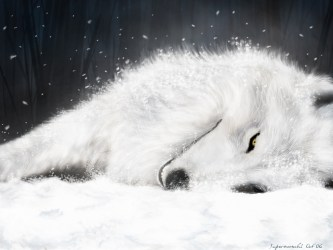 wolf arctic wolves tribute snow cool anime background wallpapers wolfs cubs rain awesome fox ice fanpop