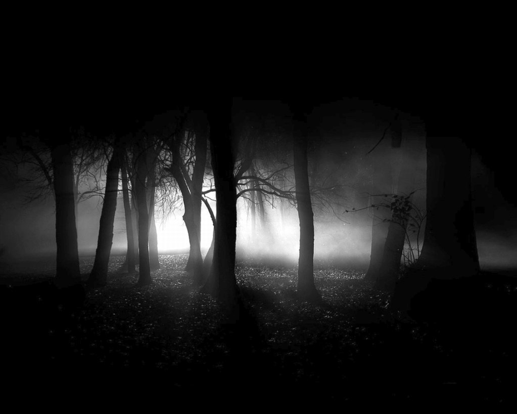 Dark Forest - the-dark-side-of-everything photo