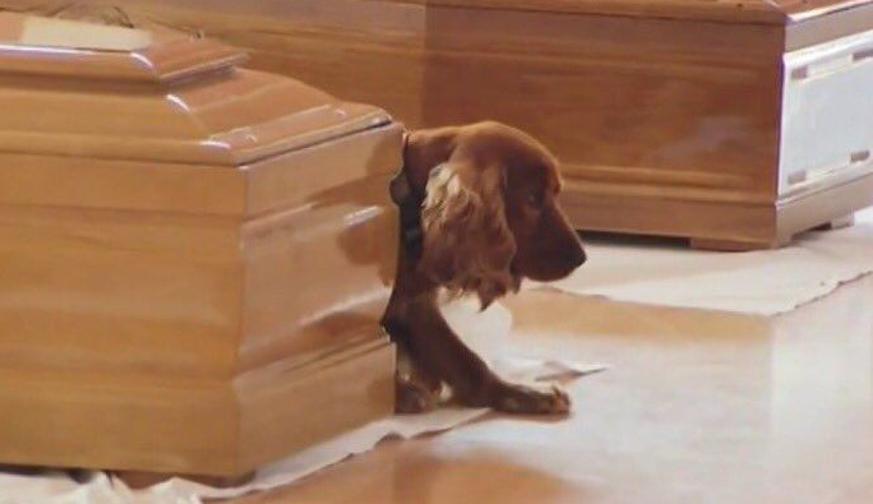 Risultati immagini per funerali terremoto cane