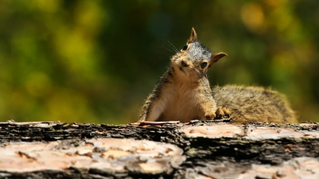 15 squirrel facts for