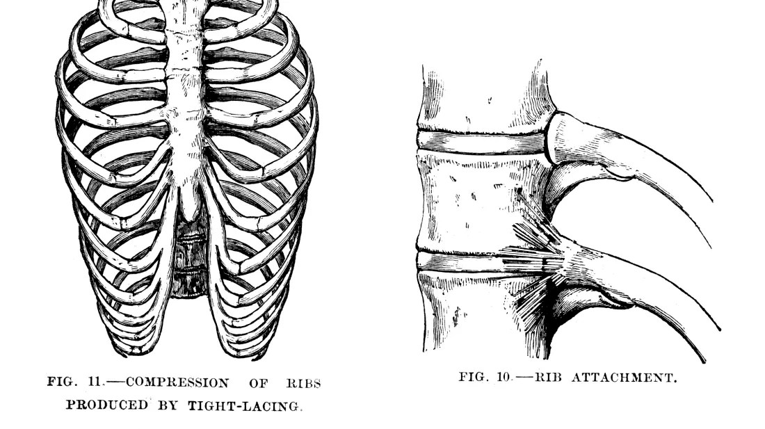 Body Of Sternum Diagram 9 Interesting Facts About The Ribs Mental Floss