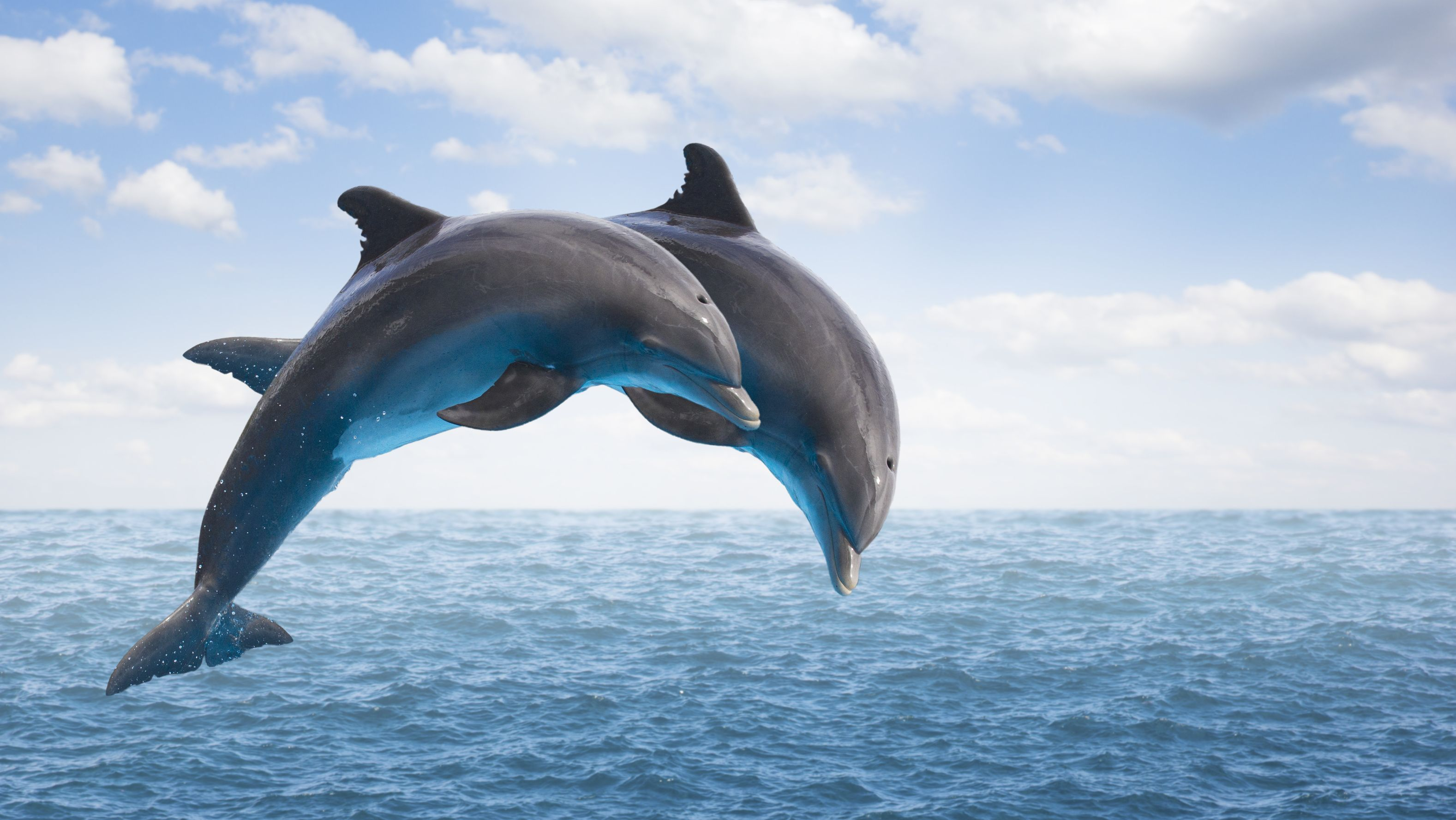 15 Delightful Facts About Dolphins Mental Floss