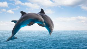 Facts About Dolphins | Mental Floss