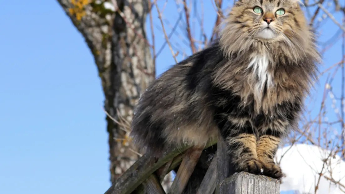 10 furry facts about