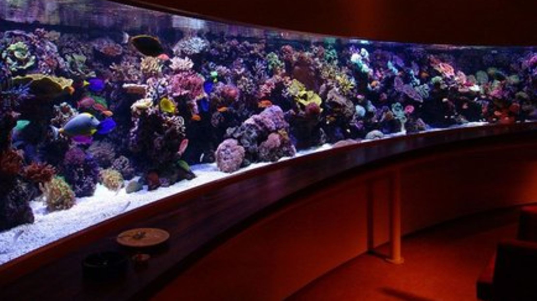 9 really cool aquariums