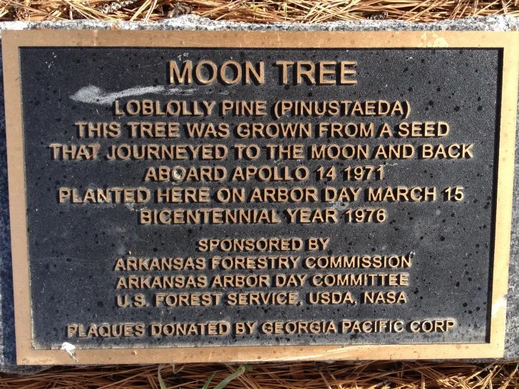 Moon Tree plaque.