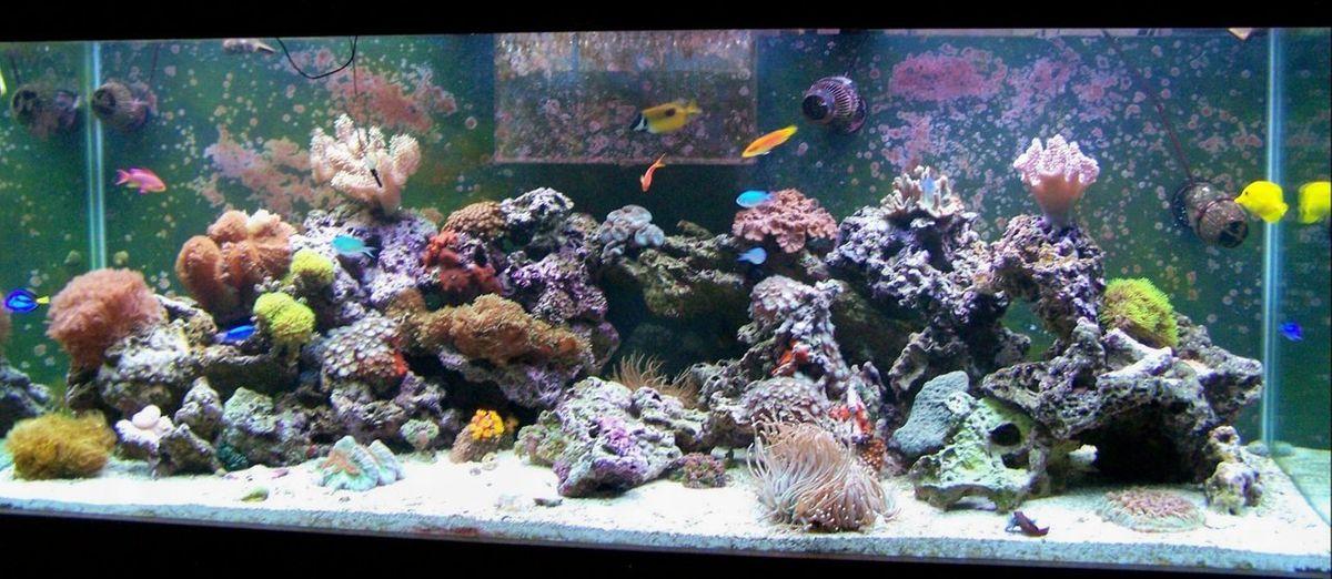 stocking a saltwater reef aquarium