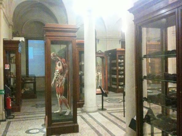 Forlanini Salvate dalla distruzione il Museo anatomico e i suoi reperti  Corriereit