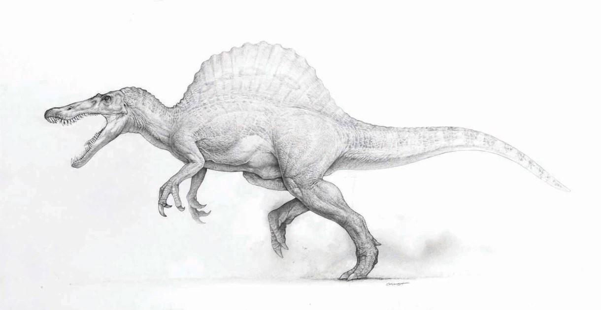 https://i0.wp.com/images2.wikia.nocookie.net/__cb20130707231057/jurassicpark/images/3/34/Spinosaurus-JP3-01.jpg