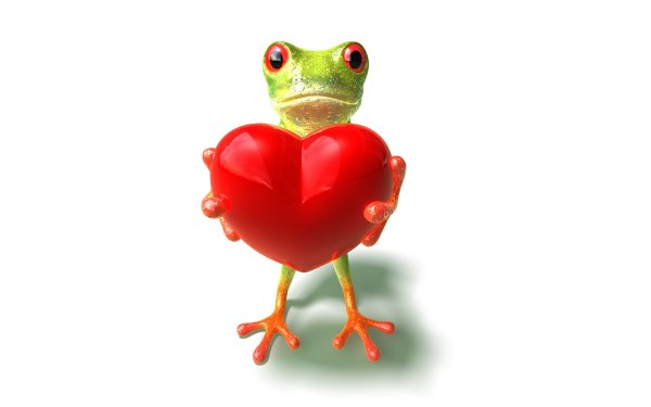 Frog In Love Full Hd Wallpaper And Background