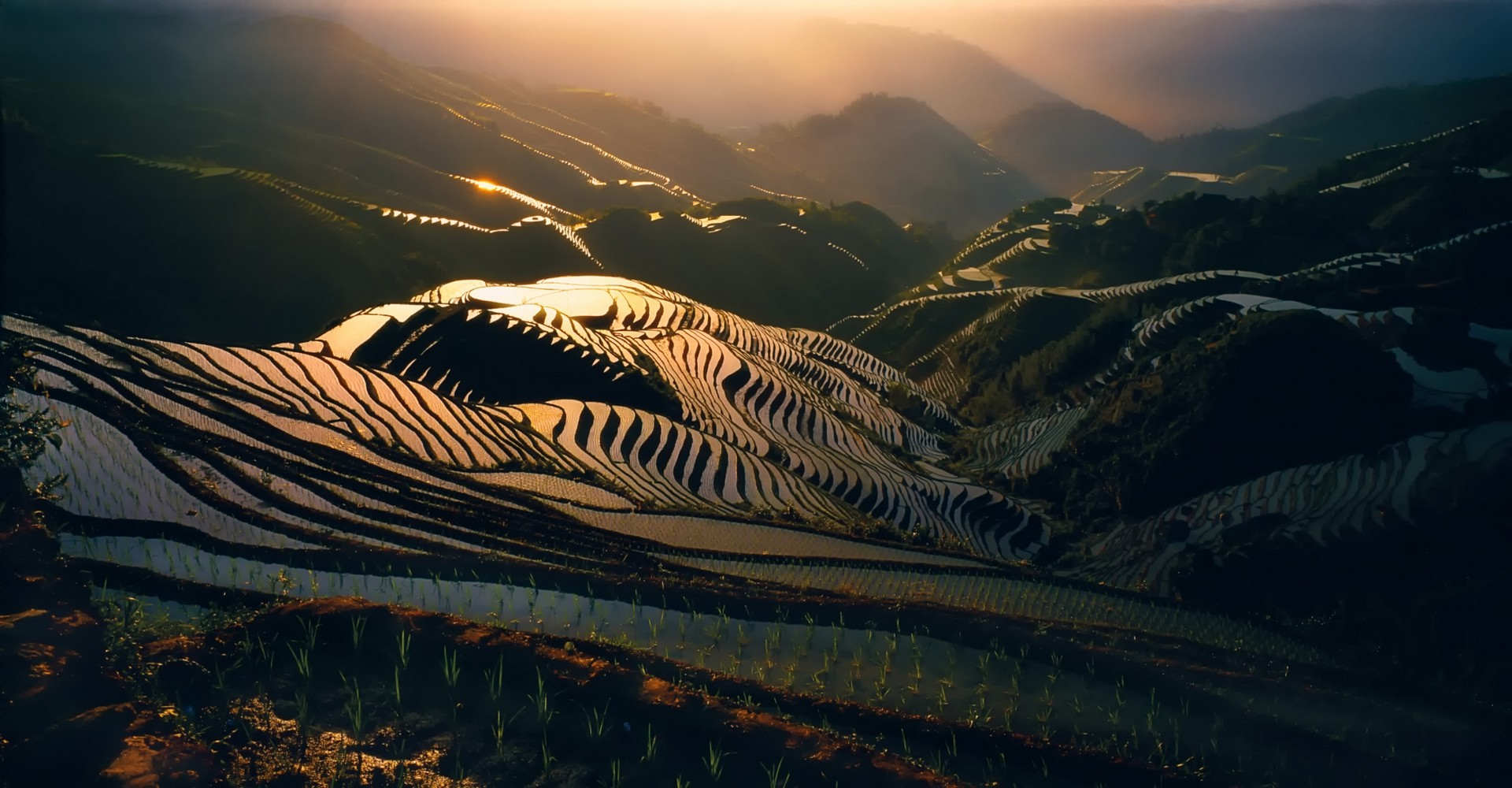 Fall Iphone Wallpaper Pinterest Rice Terrace Wallpaper And Background Image 1920x1000