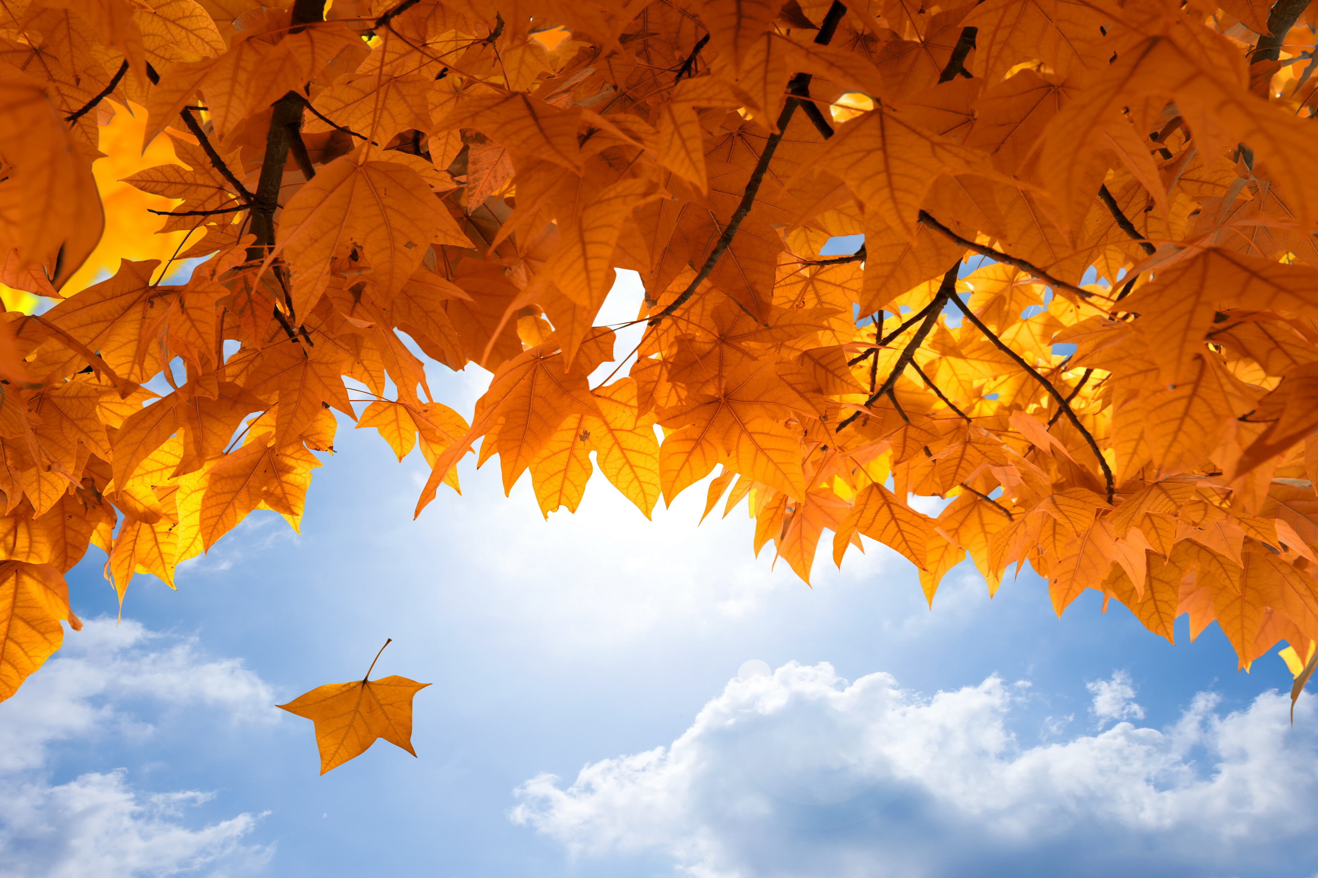 Fall Leaves Pictures Wallpaper Fall 4k Ultra Hd Wallpaper Background Image 4250x2833
