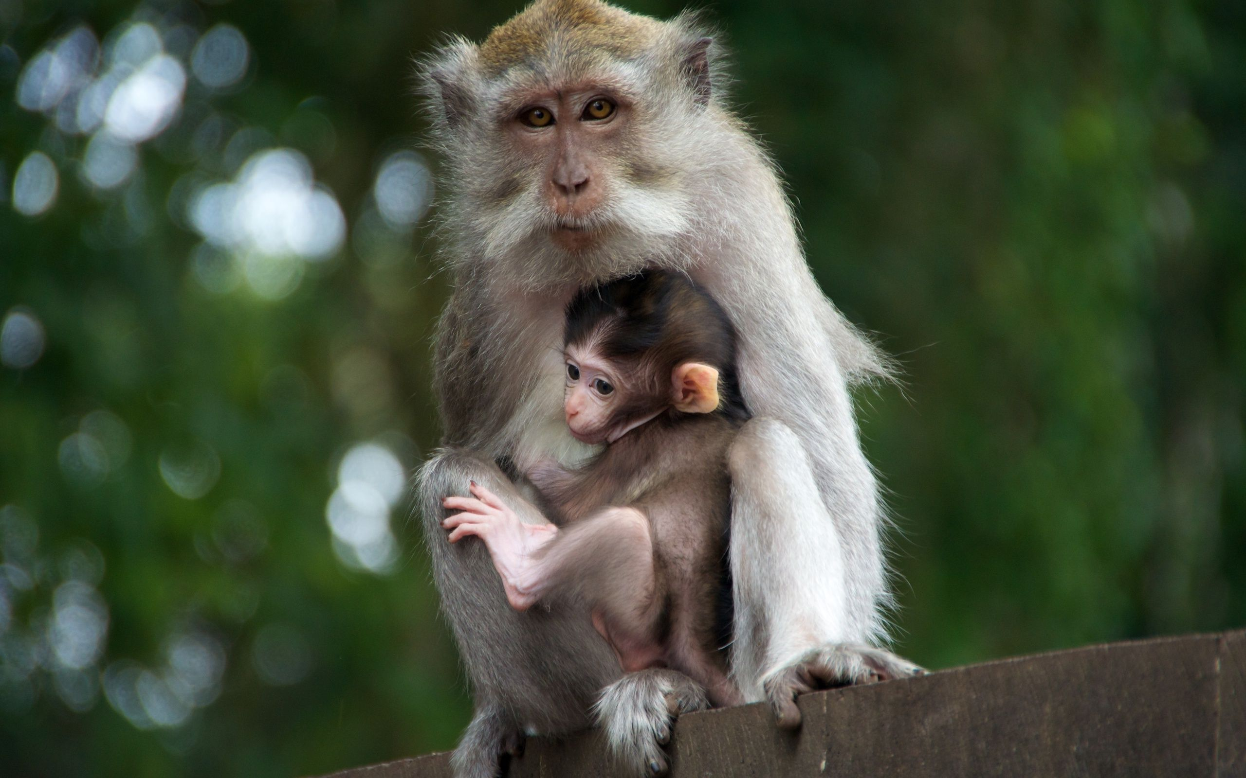 Cute Baby With Parents Wallpaper Mama Monkey And Her Baby Hd Wallpaper Background Image