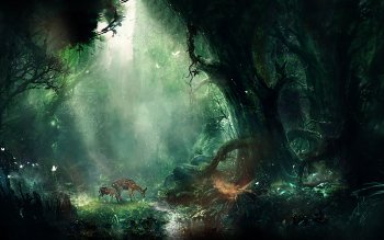 235 Forest HD Wallpapers Background Images Wallpaper Abyss
