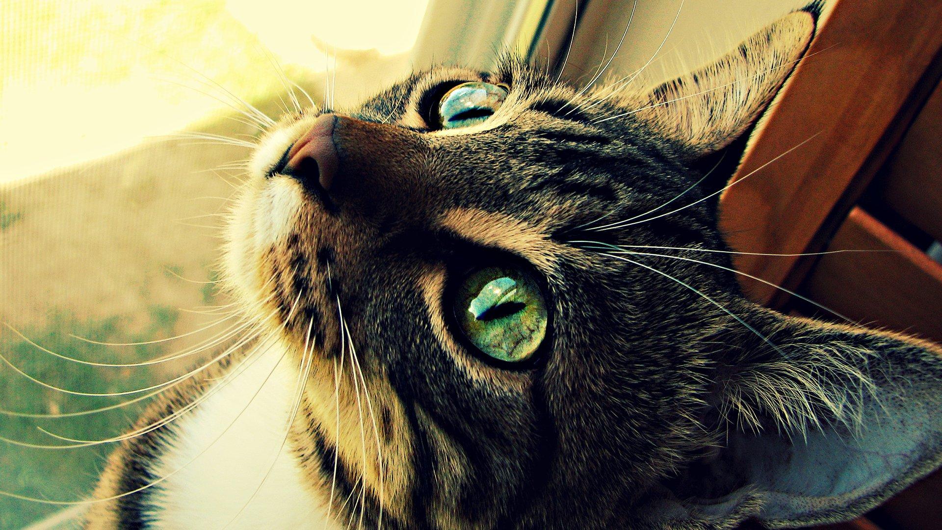 Cute Hacker Wallpaper Cat Full Hd Wallpaper And Background Image 1920x1080