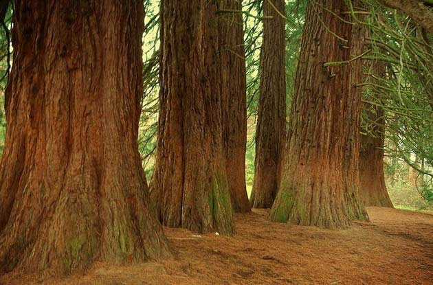 Redwood National Forest - Places to visit out west