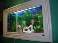 Wall Mounted Fish Tanks