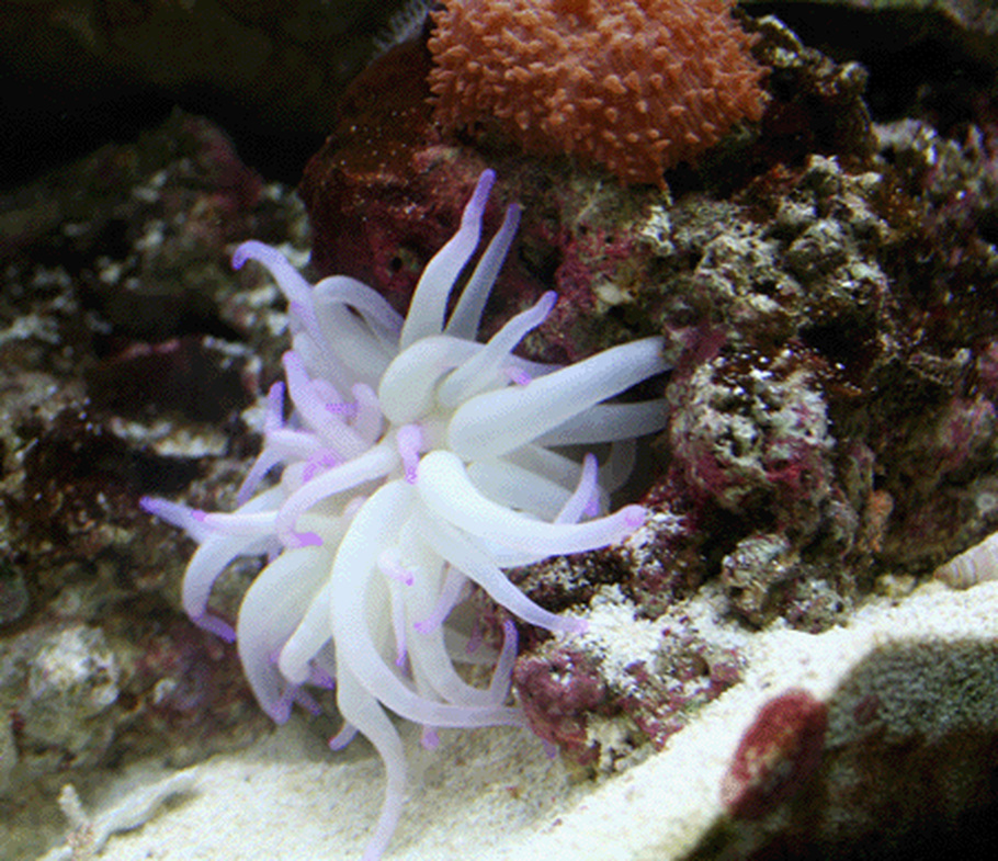 guide for keeping anemones