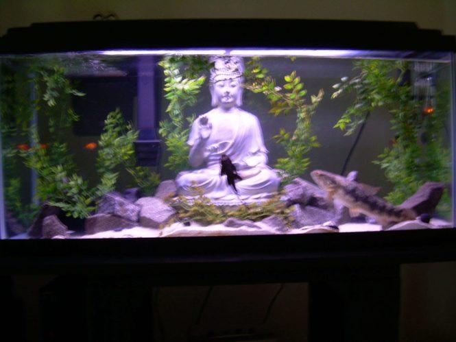 Image Of Fish Tank Decoration Ideas