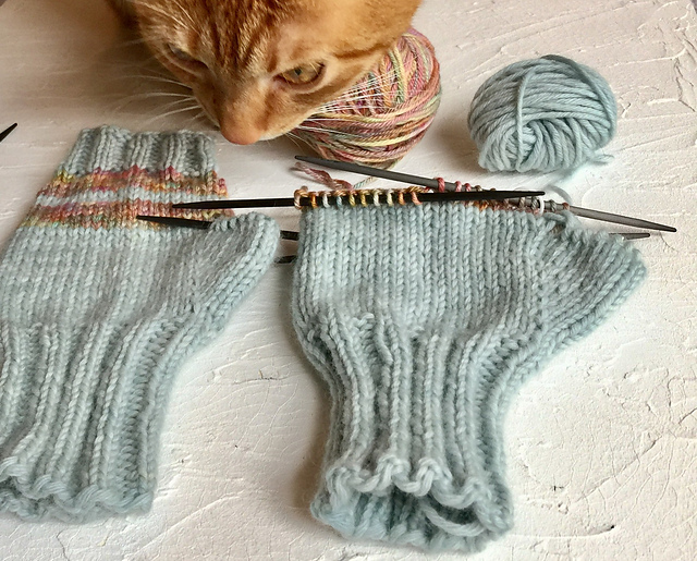 kitty with knitting