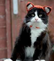 Cat wearing fox hat.