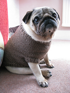 Sweater For Pug : sweater, Ravelry:, Sweater, Pattern, Angelcatkins, (Elizabeth, Watkins), Designs