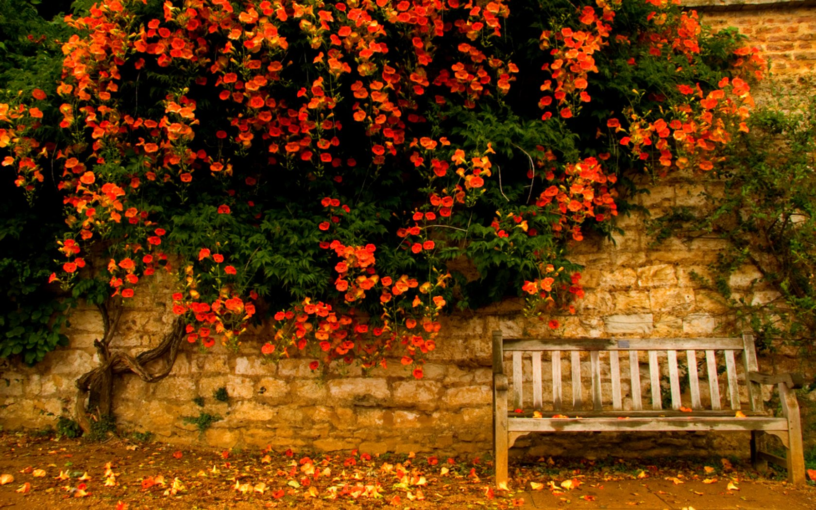 Fall Leaves Wallpaper Windows 7 Herbst Wallpaper And Hintergrund 1680x1050 Id 166568