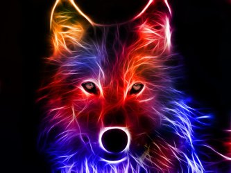 1062 Wolf HD Wallpapers Background Images Wallpaper Abyss