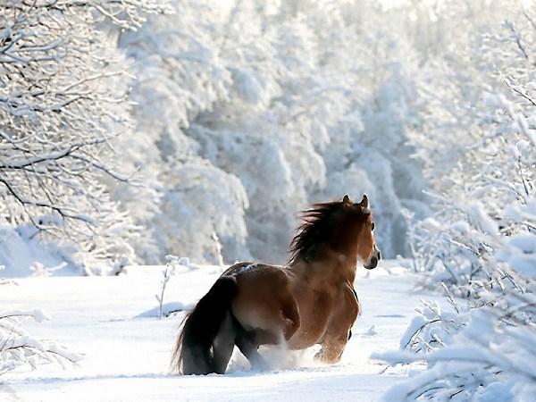 Winter Snow Scenes with Horses