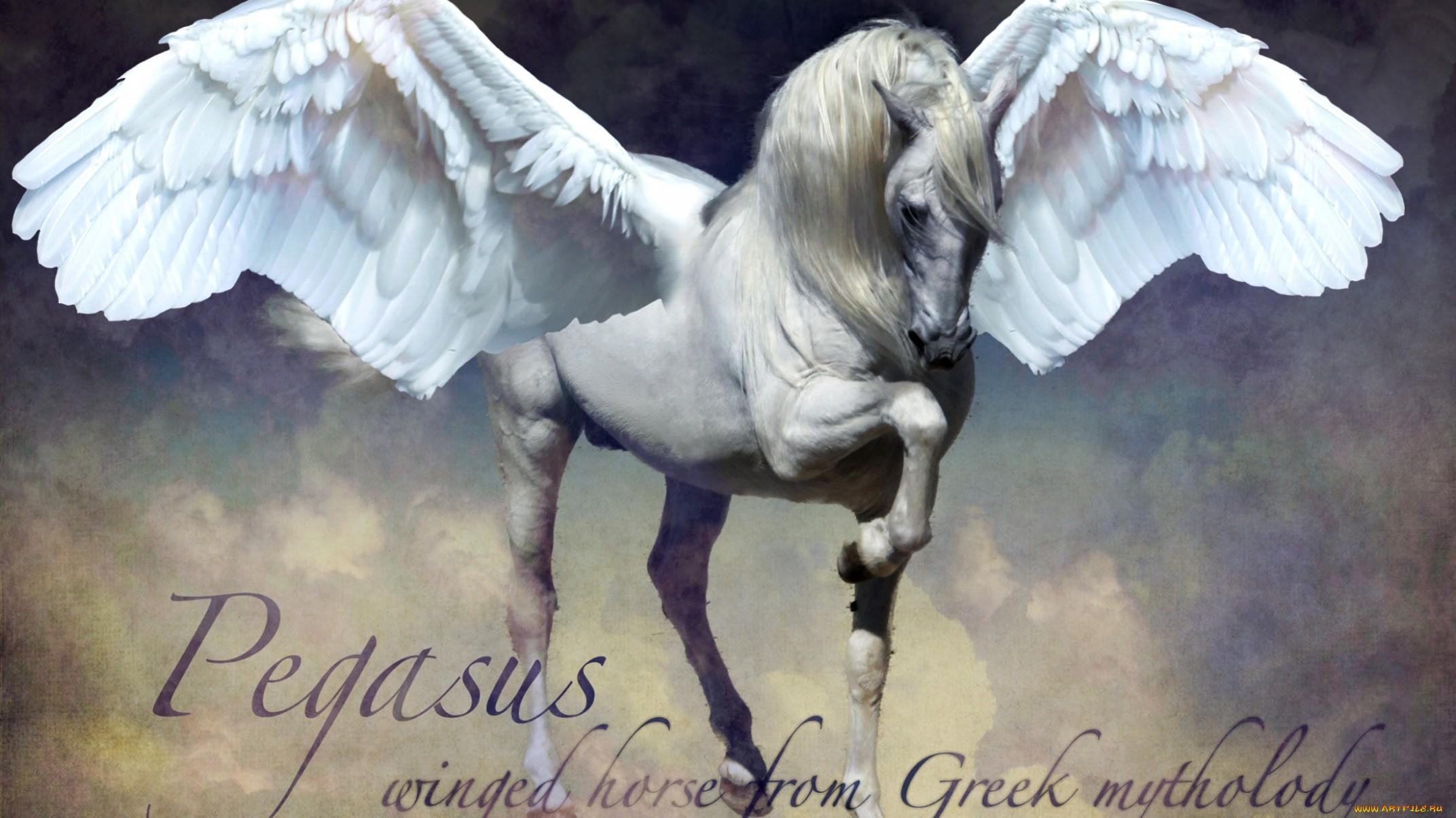 1440x900 Wallpaper Quote Meh Pegasus Wallpapers Hintergr 252 Nde 2144x1206 Id 250086