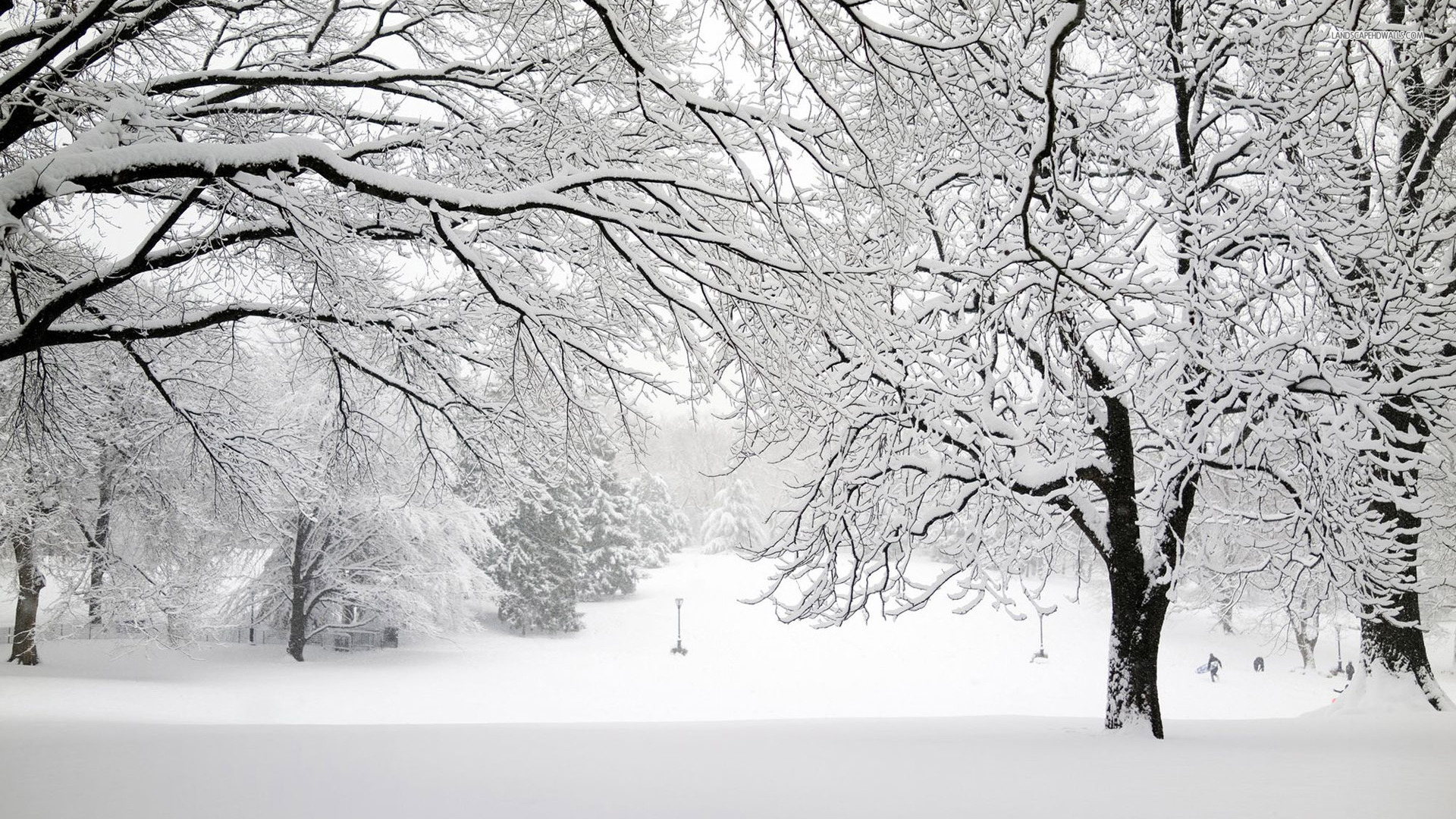 SnowCovered Trees in Winter HD Wallpaper  Background