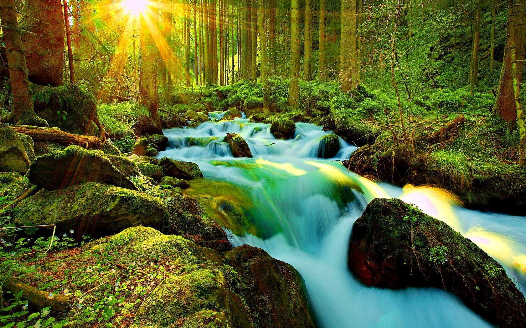 Jog Falls Wallpapers Desktop Sunshine On Forest Stream Wallpaper And Background Image