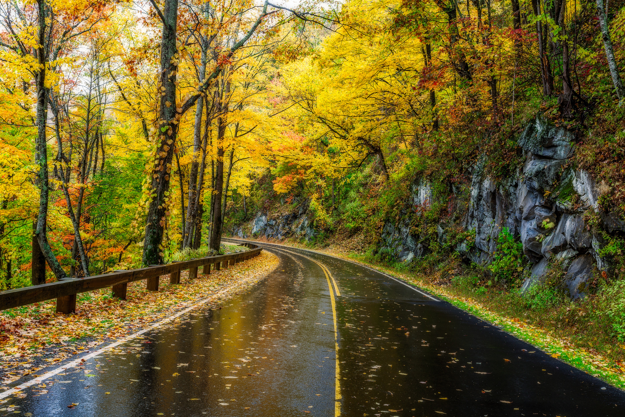 Great Smoky Mountains Fall Iphone Wallpaper Wet Autumn Road Hd Wallpaper Background Image