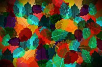Abstract Autumn Leaves Full HD Wallpaper and Background ...