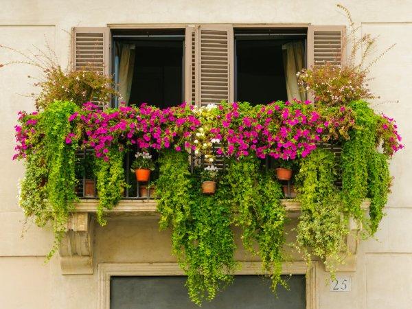 spring balcony hd wallpaper background