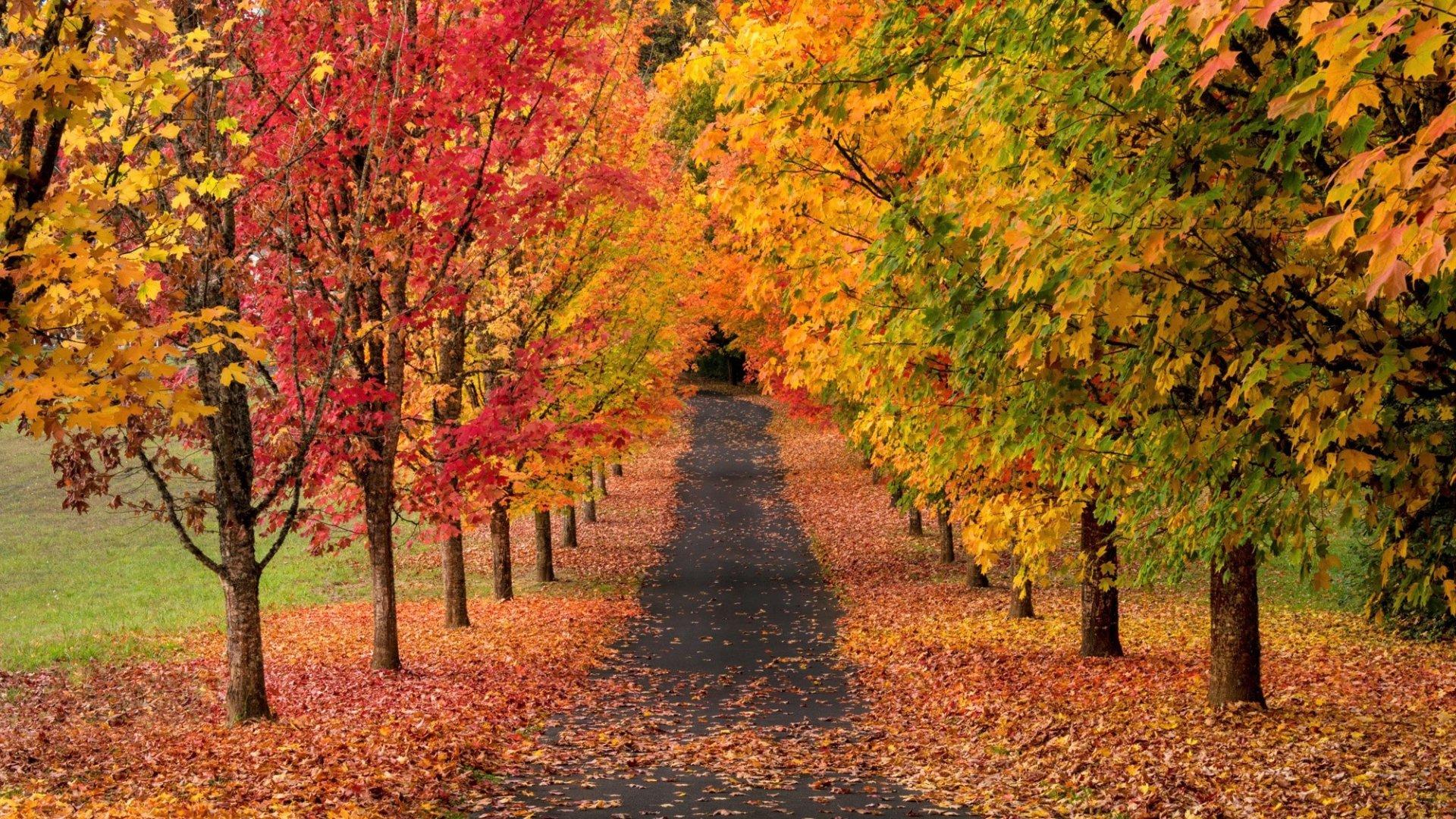 Fall Farm Desktop Wallpaper Tree Lined Autumn Road Hd Wallpaper Background Image