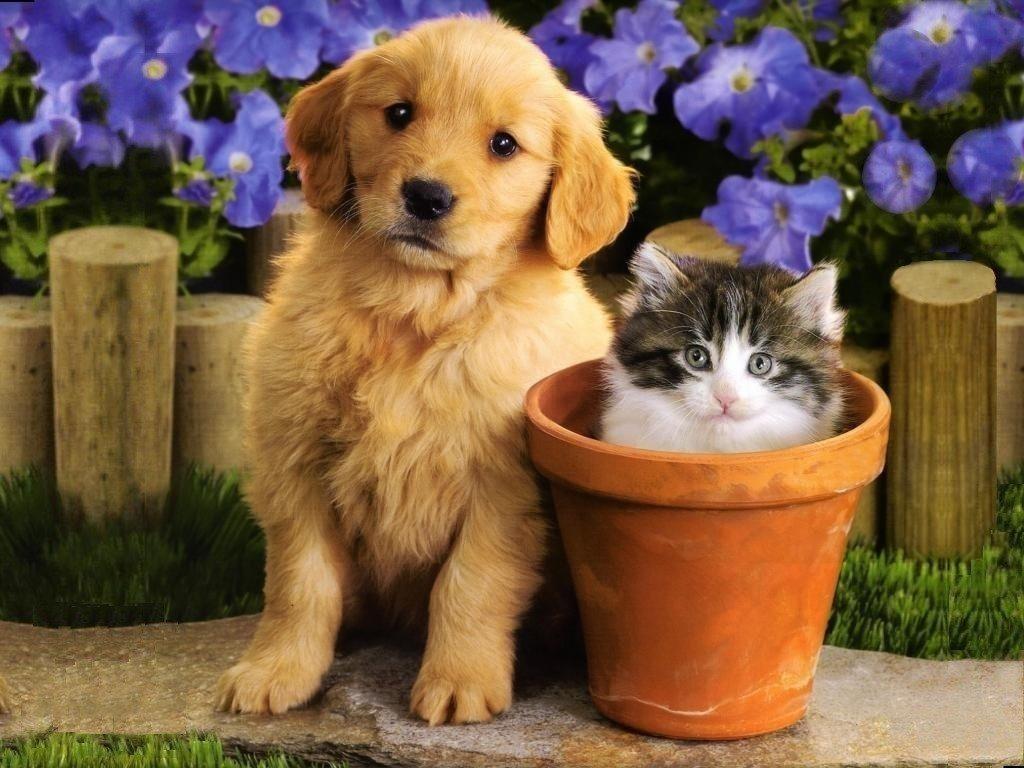 kittens puppies teddybear64 wallpaper