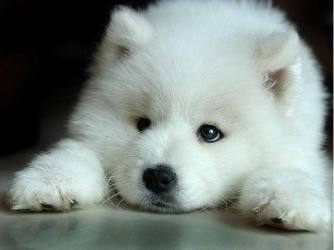wolf cute fanpop wolves zone baby adorable cutest really pup fluffy ever arctic