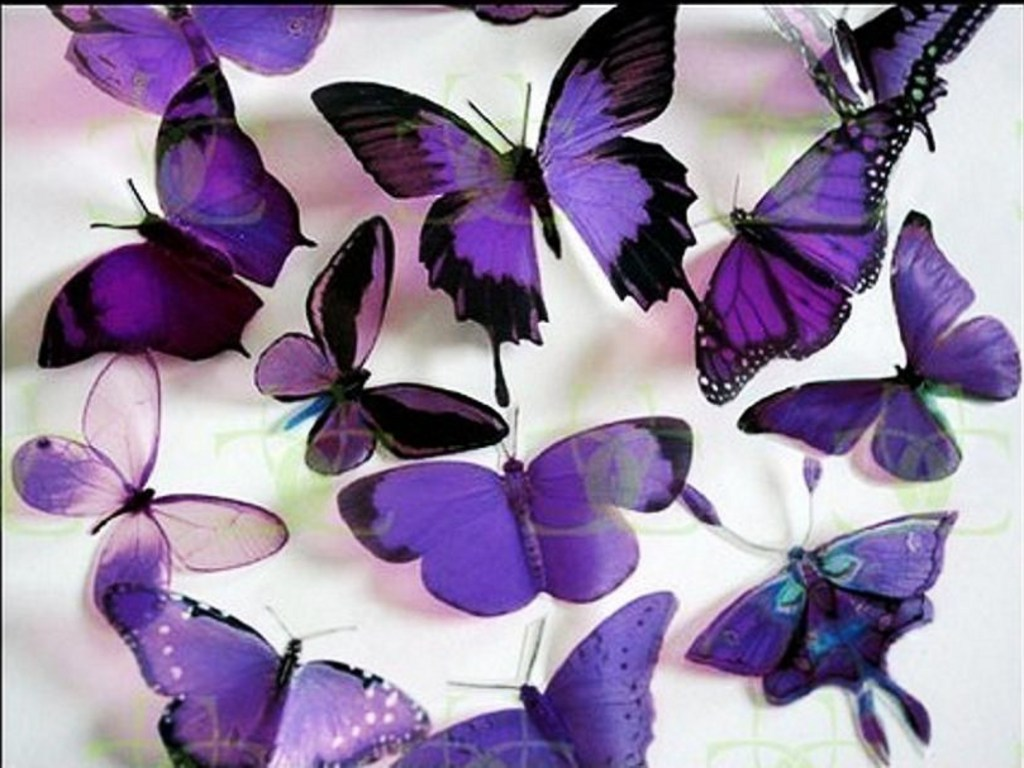 https://i0.wp.com/images4.fanpop.com/image/photos/17400000/Purple-Butterflies-butterflies-17473487-1024-768.jpg