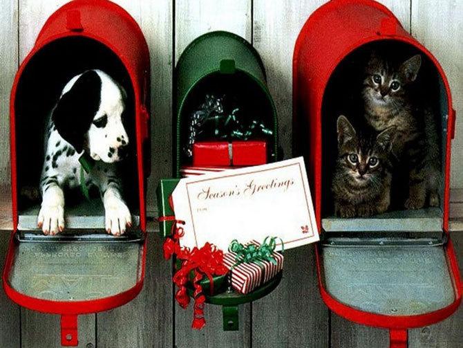Christmaspets Christmas Photo 17768718 Fanpop