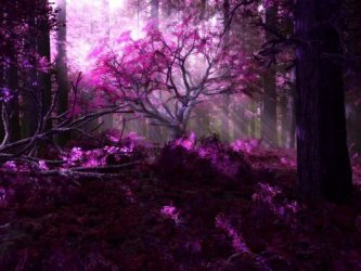 purple forest tree daydreaming wallpapers background autumn nature fantasy holy hd fanpop desktop flowers trees abstract isaak fall 2nd magical
