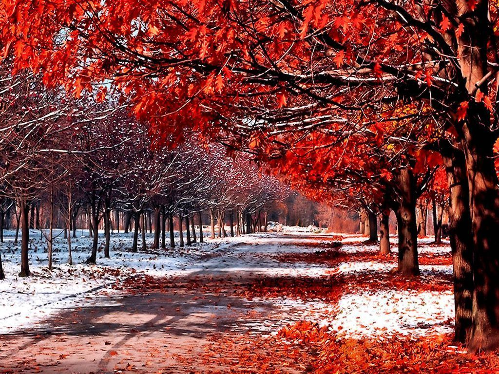 Falling Leaves Live Wallpaper Hd Snow And Leaves Daydreaming Wallpaper 18394792 Fanpop