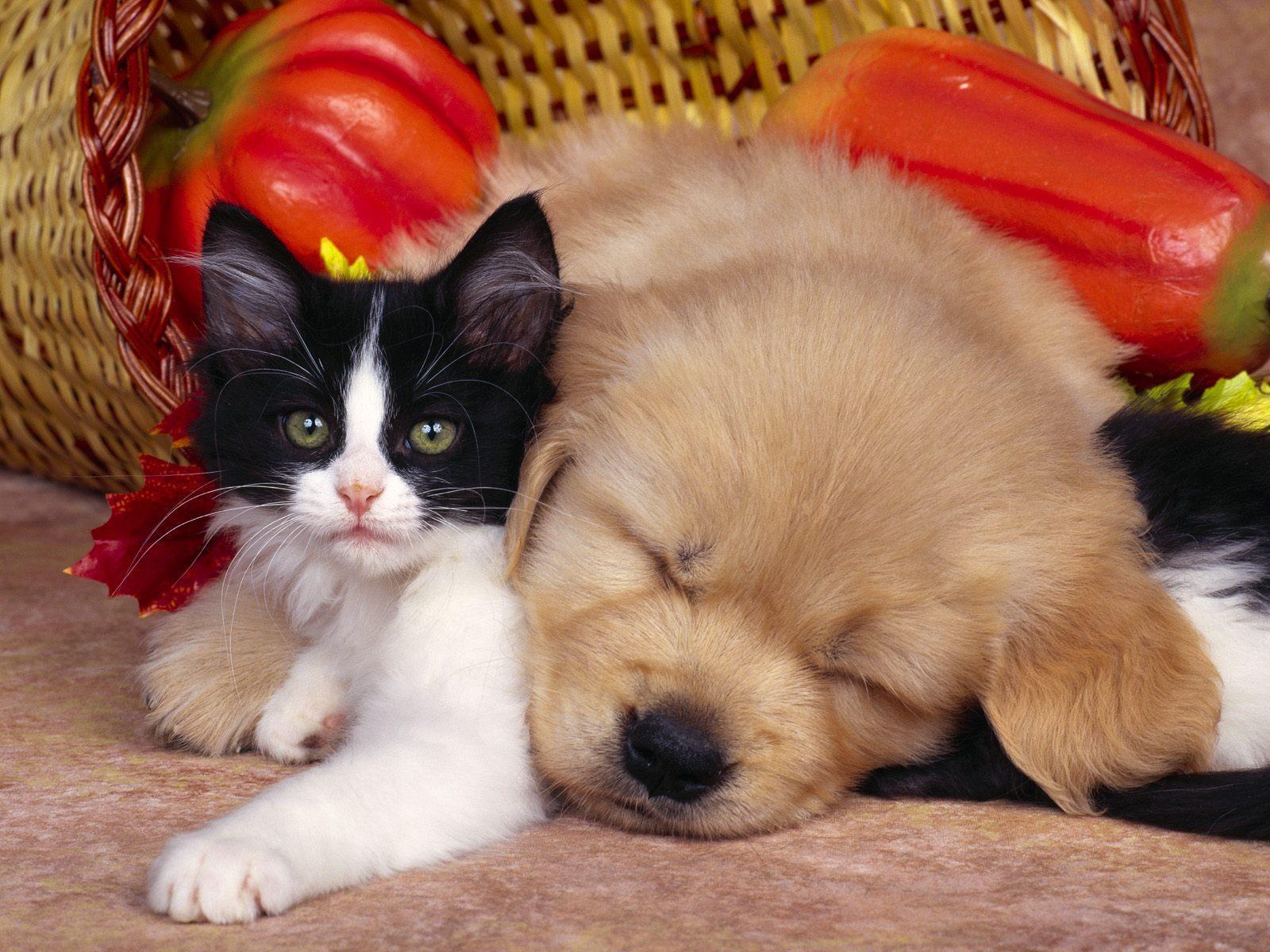 baby puppy kitten baby