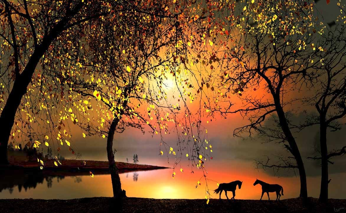 natureza e cavalos