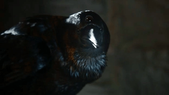 Three Eyed Crow game of thrones 21859879 624 352