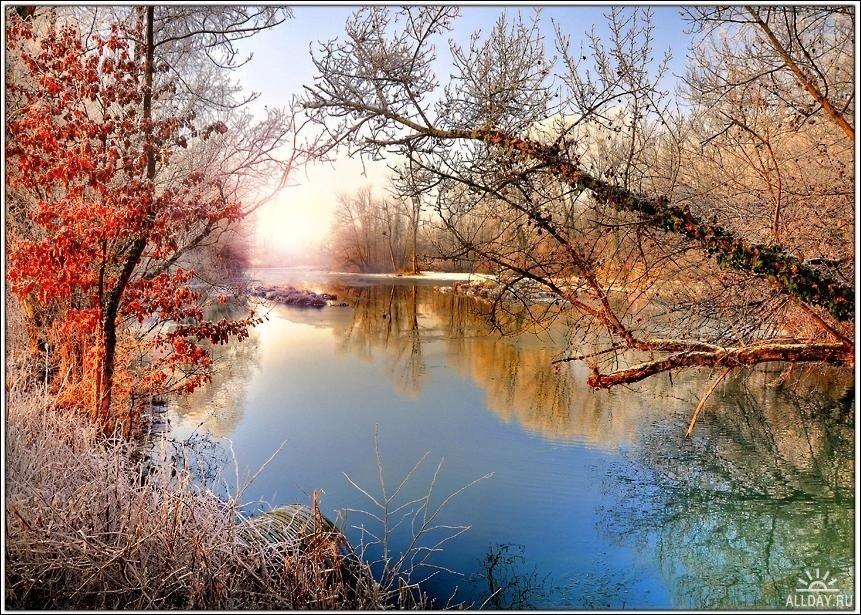 Frosty Fall Leaves Wallpaper Winter Trees Winter Photo 22173854 Fanpop