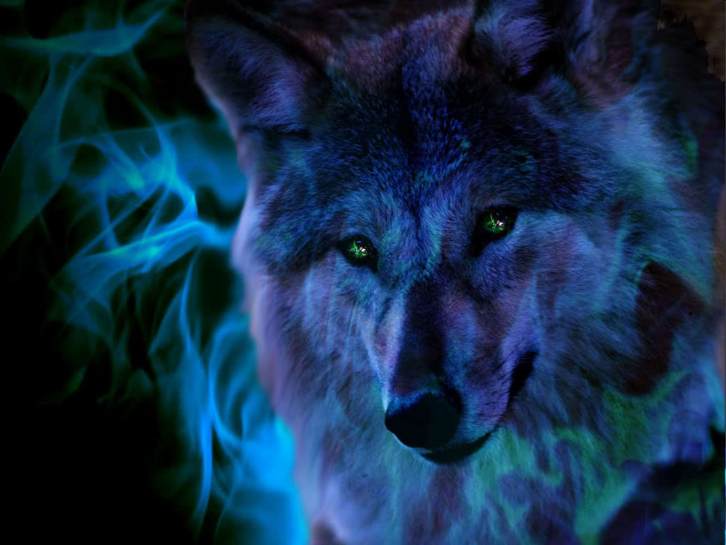 cool wolf pic the