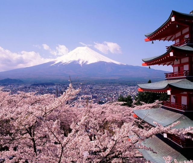 Japanese Cherry Tree Sakura Images Cherry Blossoms And Fuji Hd Wallpaper And Background Photos